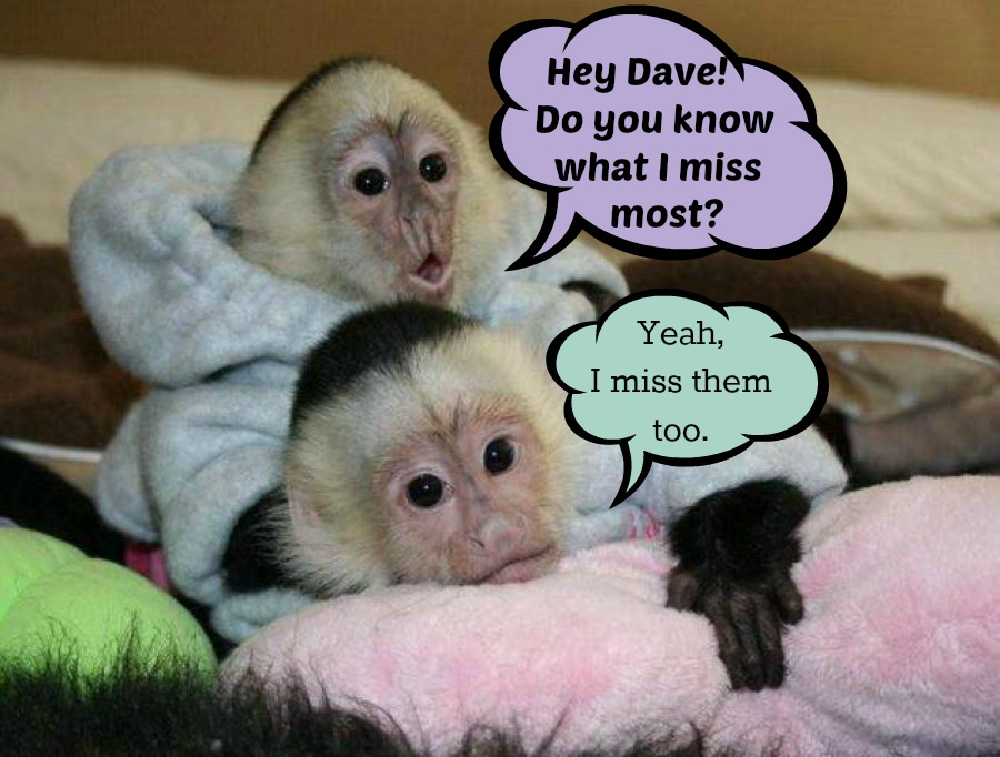 D&M Monkey